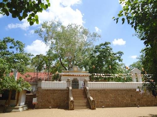 8-Bodhi-Tree-2