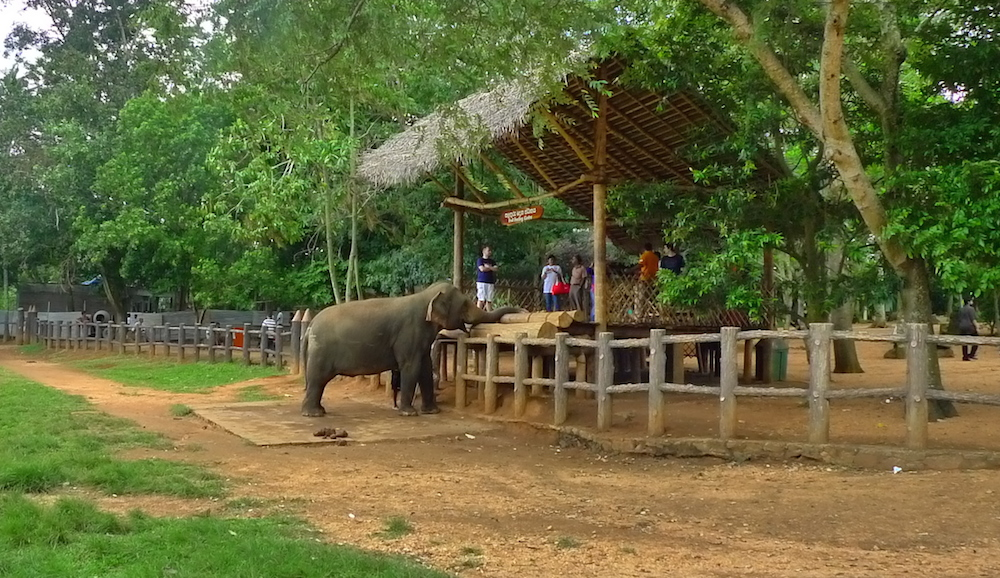 Un éléphant se baffre